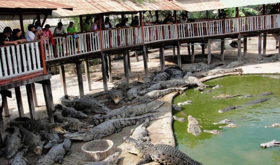 苏梅岛特色物品和纪念品及去淘宝贝的地点 2014-04-03发表  景点鳄鱼