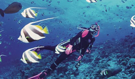热带鱼类等海洋生物,是中国乃至世界开展海底观光