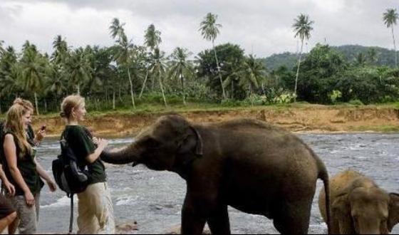大象孤儿院斯里兰卡野生动物局于1975年