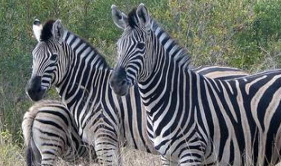 【比邻斯堡动物保护区】(南非四大野生动物园之一)