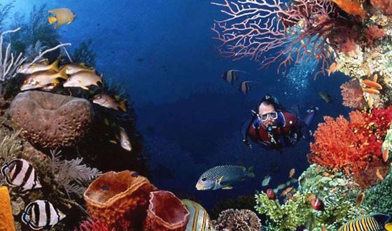海底最可爱的动物的壁纸