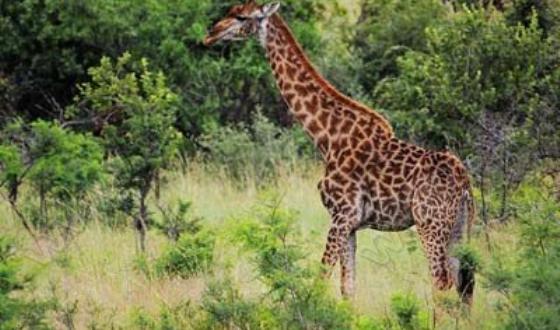 比林斯堡动物保护区