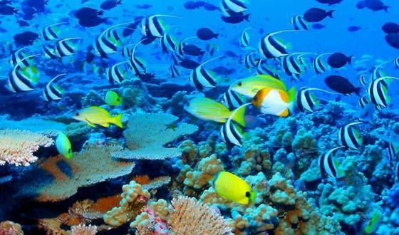 宁波出发澳大利亚凯恩斯大堡礁八日游