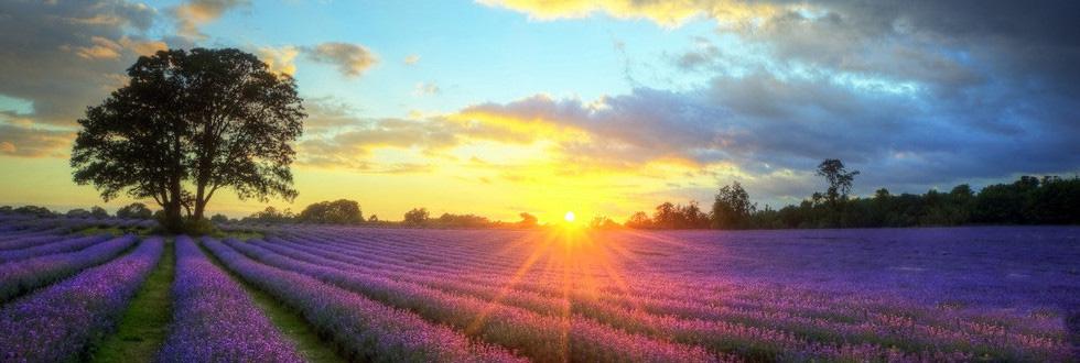 有这么一个地方、生活简朴安详、可以随意的按自己的意愿生活,躺在草地上看着蓝天白云,假日里看日出东方,红霞万里,花瓣上的露珠折射朝阳,而散发着五光十色的迷人景致。带着帐篷看暮色再看晨曦,美好时光尽收记忆的画面里。你是否也想体验这样的生活也想知道这些美丽的地方都有些呢,那么就由宁波旅行社的小编来带你领略世界最美的72个地方。 世界上最美的72个地方普罗旺斯 这不再是一个单纯的地域名称,更代表了一种简单无忧、轻松慵懒的生活方式,一种宠辱不惊,闲看庭前花开花落,去留无意,漫随天外云卷云舒的闲适意境。如果旅行是为