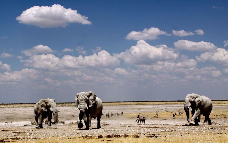 埃托沙公园的季节变化影响着野生动物的活动,形成有趣的动物迁徙链