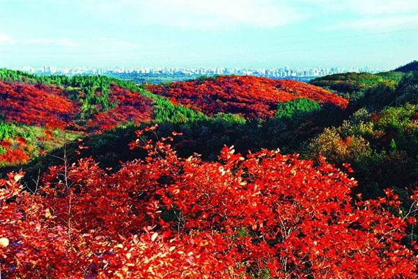 西山国家森林公园红叶
