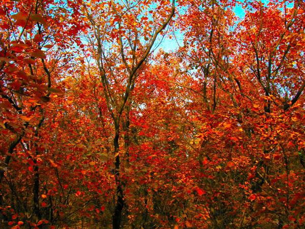 奥林匹克森林公园红叶