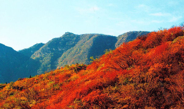 北京哪里看红叶