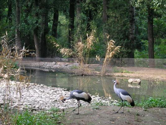 我爱北京动物园2(爱情与家园)