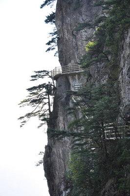 在海拔这么高的地方,主要生长的都是柏树,杉树,松树,属于针叶树种.