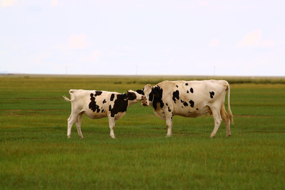 内蒙古呼伦贝尔动物