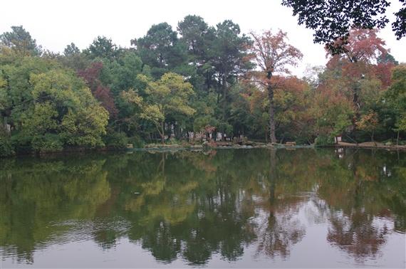 五彩枫叶——江苏苏州天平山风景区赏枫