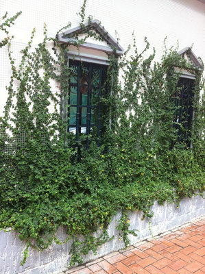 欧式绿色复古窗户