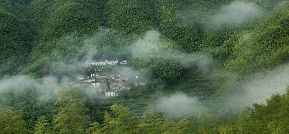 木坑竹海一年四季竹林旺盛