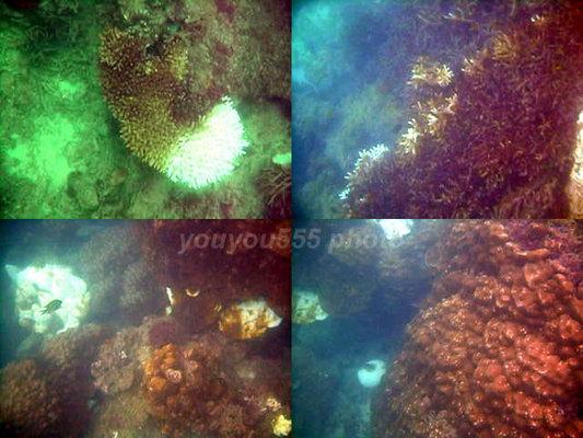 普吉见闻录2:海底世界,和想象有差距