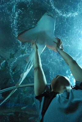 圣淘沙海底世界