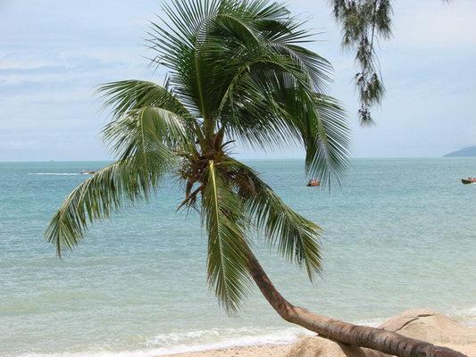 三亚矢量椰子树