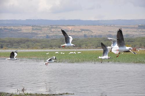 金色肯尼亚动物大迁徙十日游